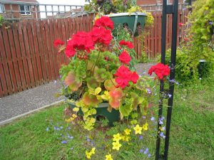 Hanging Basket by The Environment Group