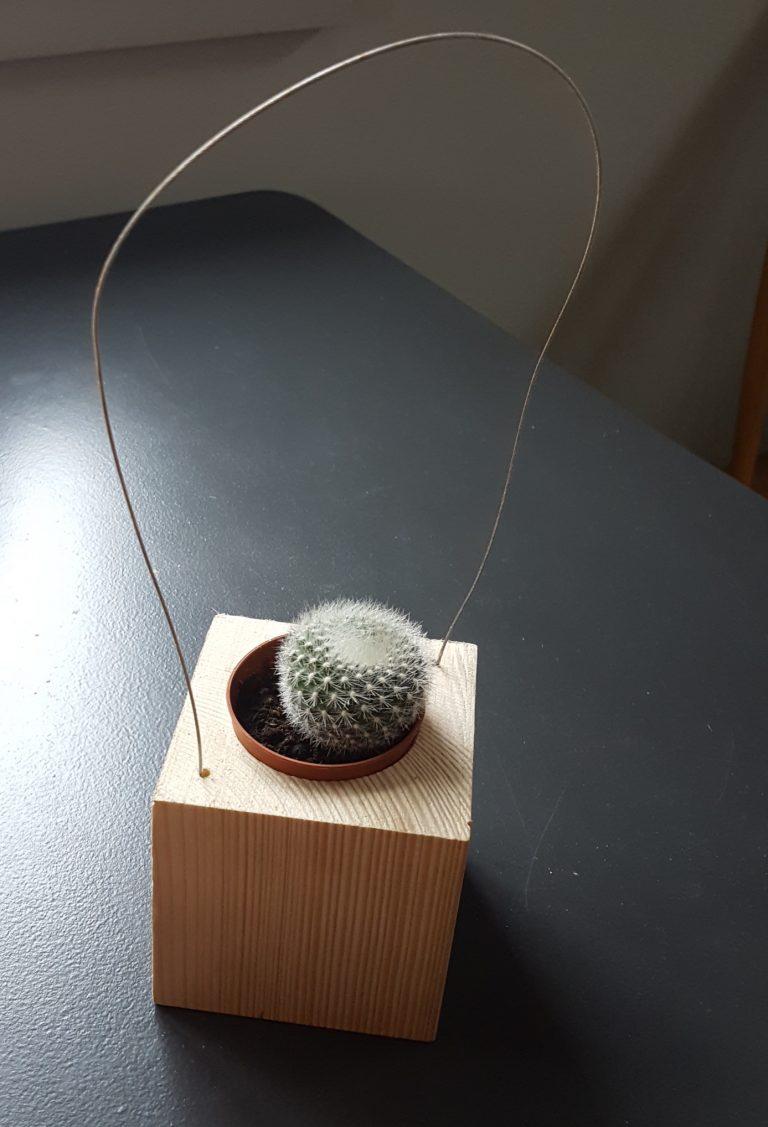 hanging cactus pot